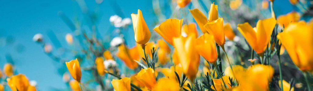 e-perspectives, sourire, jaune, soleil, rayonner, calm', envie, aimer, joie, bonheur, harmonie